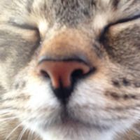 catsarelyfe