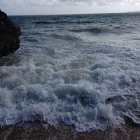 shayla_tobias