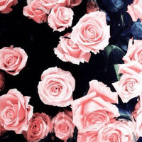 roses_room