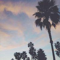 amanda_hooton