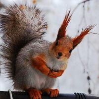 alvinsquirrel